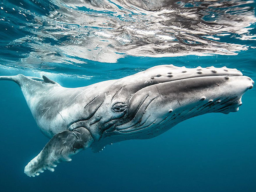 world-whale-day-photos (6)