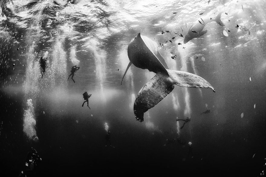world-whale-day-photos