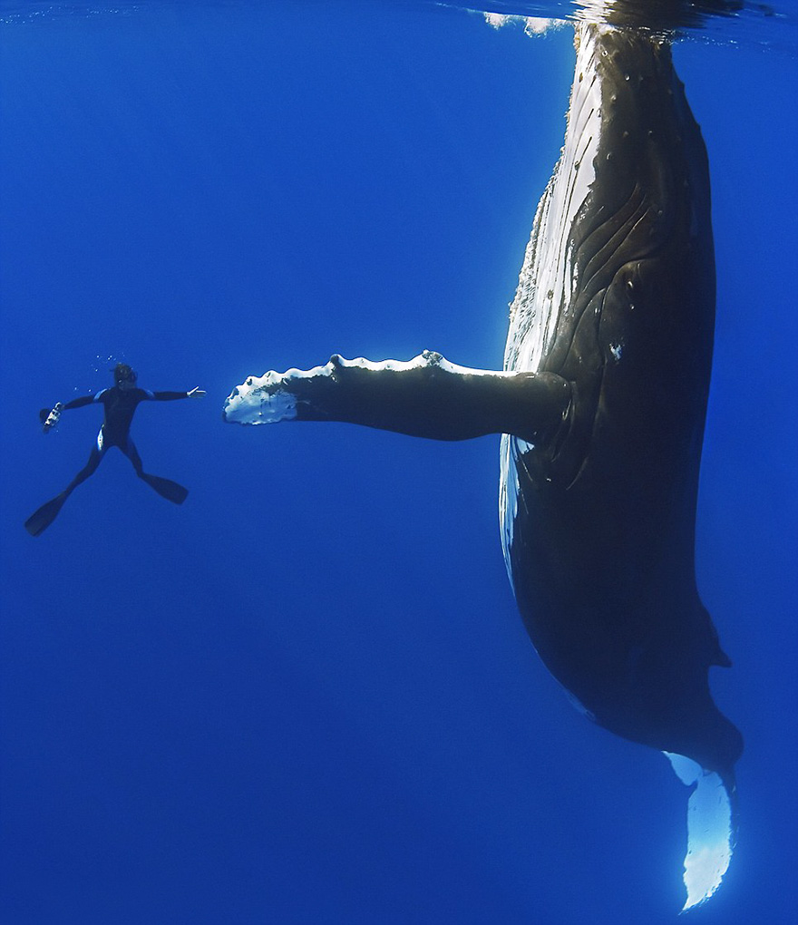 world-whale-day-photos (9)