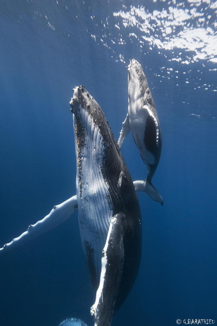 world-whale-day-photos