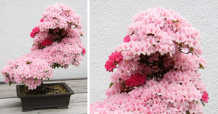 amazing-bonsai-trees-ever