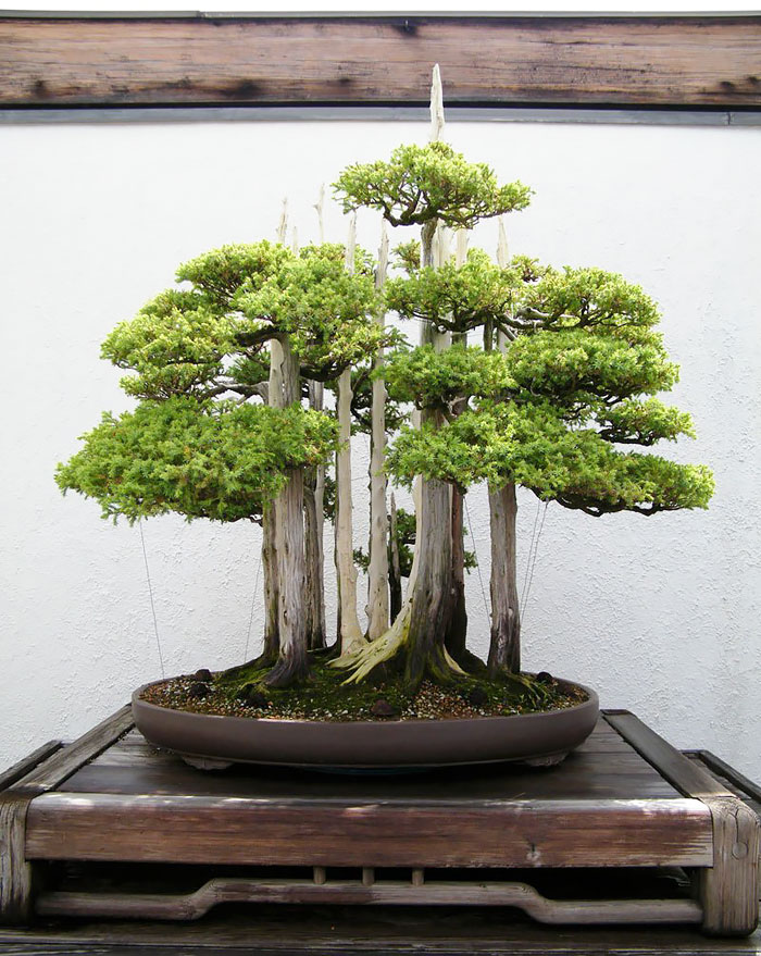 amazing-bonsai-trees-ever (10)