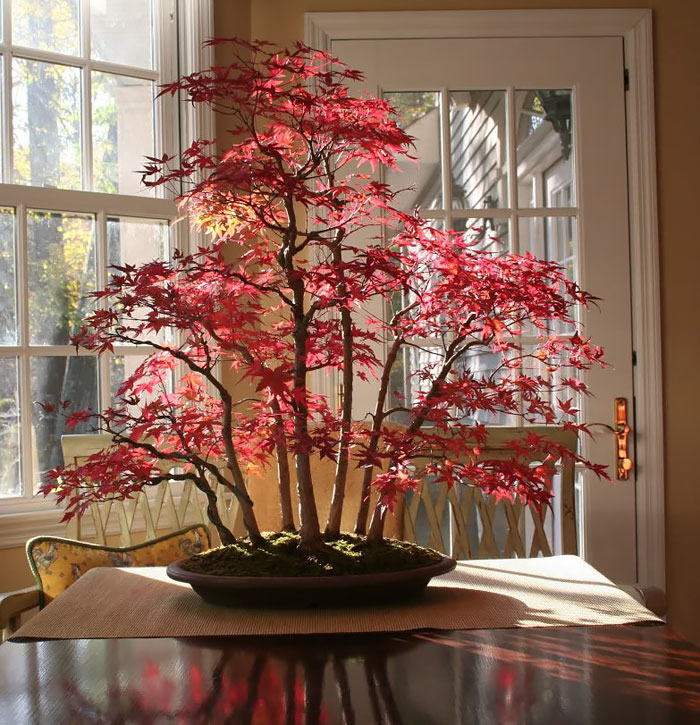 amazing-bonsai-trees-ever (11)
