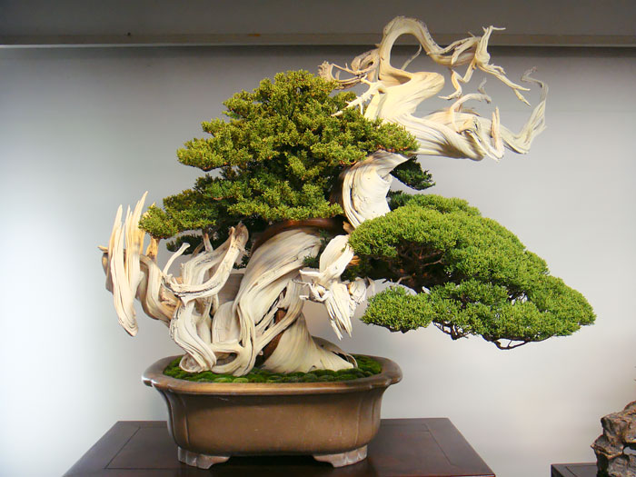amazing-bonsai-trees-ever (12)