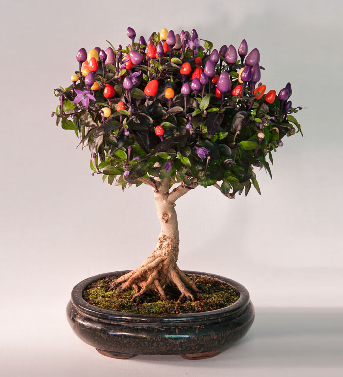 amazing-bonsai-trees-ever (14)