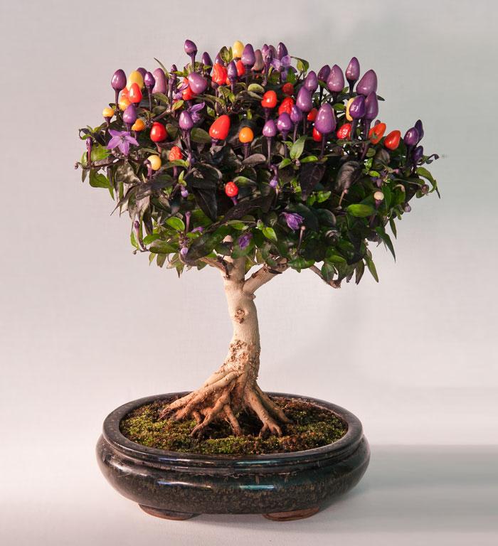 amazing-bonsai-trees-ever (14)