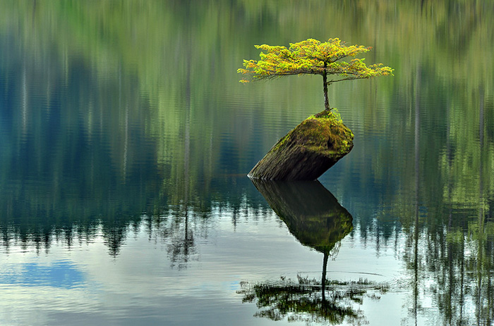 amazing-bonsai-trees-ever (16)