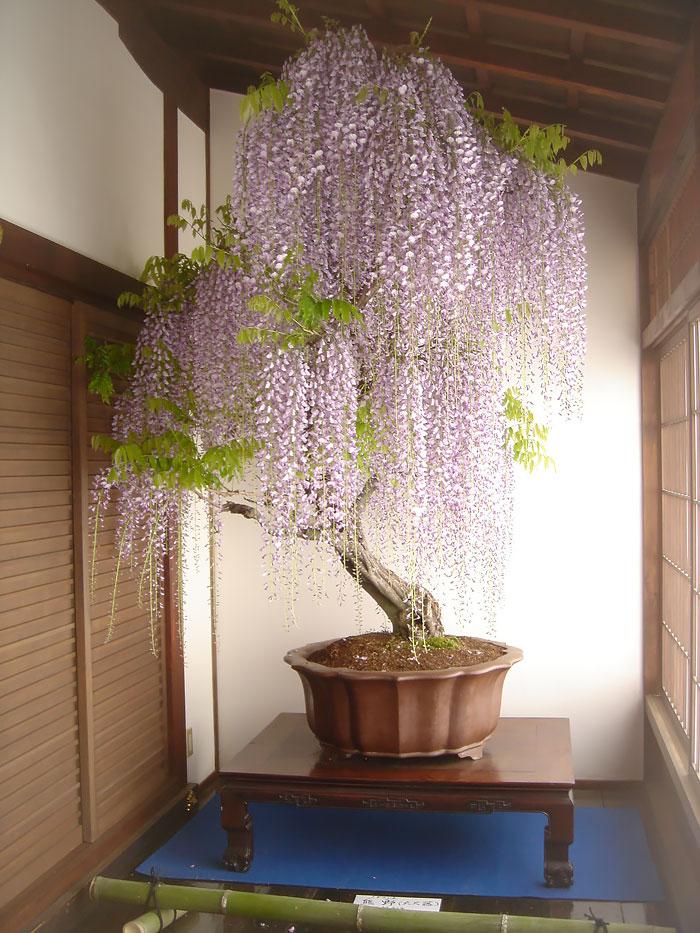 amazing-bonsai-trees-ever (3)