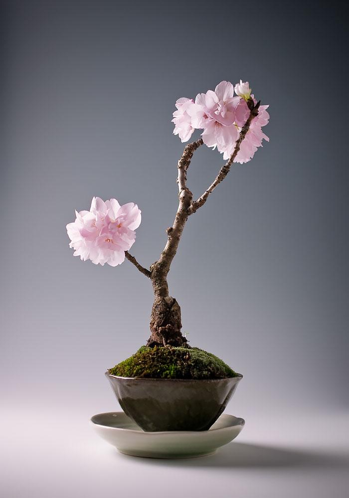 amazing-bonsai-trees-ever (5)