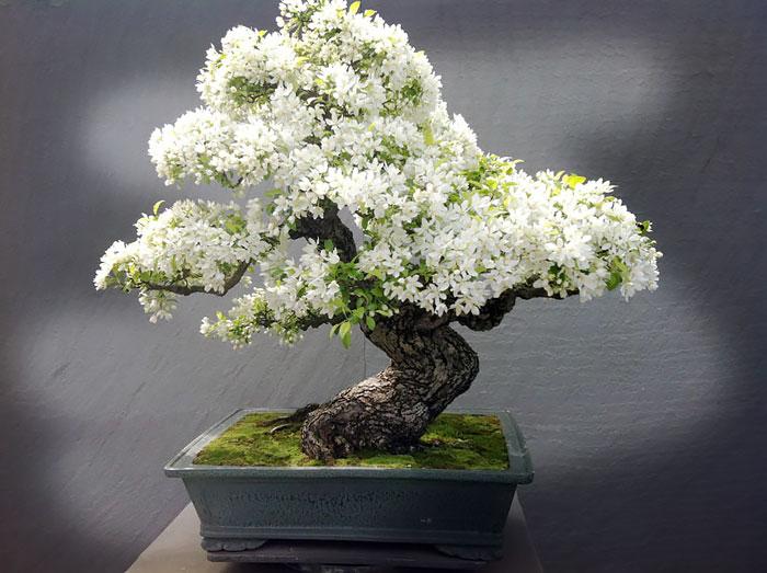 amazing-bonsai-trees-ever (7)