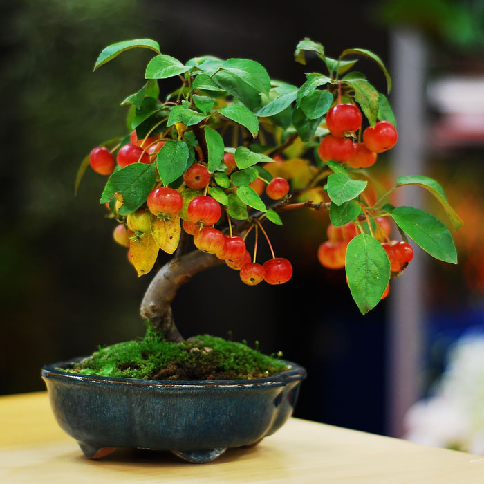 amazing-bonsai-trees-ever (8)