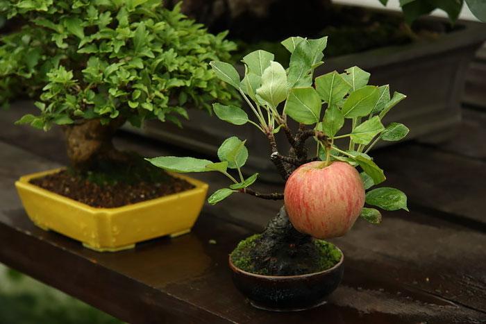 amazing-bonsai-trees-ever (9)