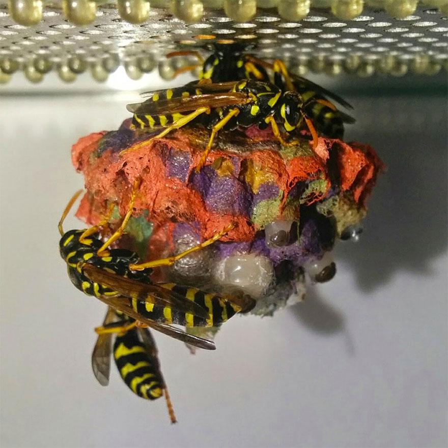 colorful-paper-wasp-nests-rainbow-mattia-mechetti-1 (1)