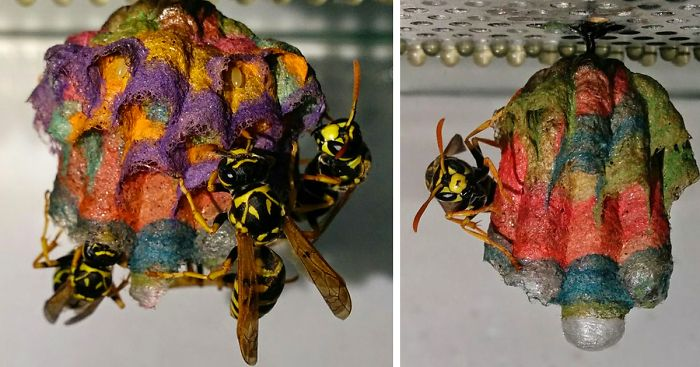 colorful-paper-wasp-nests-rainbow-mattia-mechetti