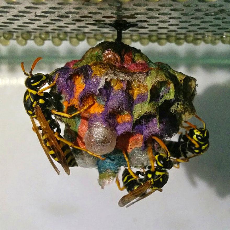 colorful-paper-wasp-nests-rainbow-mattia-mechetti (2)