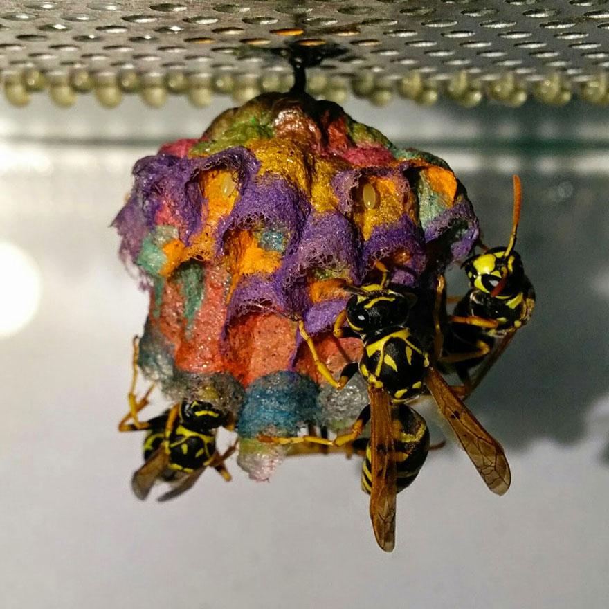 colorful-paper-wasp-nests-rainbow-mattia-mechetti (5)