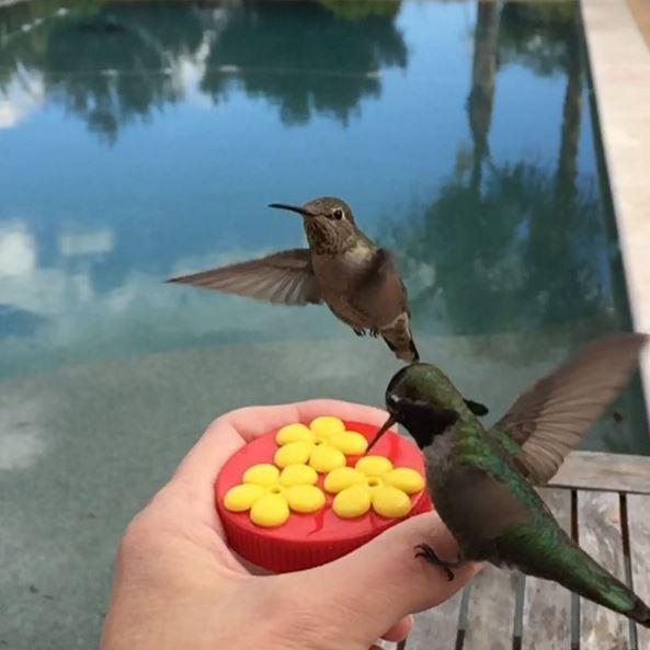 hummingbird-photography-tracy-johnson-california (16)