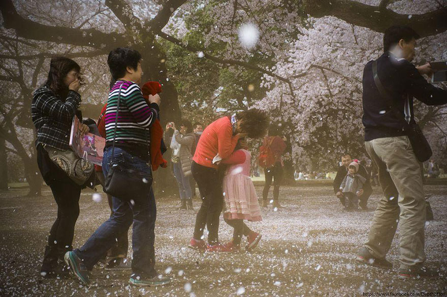 spring-japan-cherry-blossoms-national-geographics-171