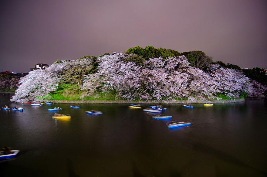 spring-japan-cherry-blossoms-national-geographics-191