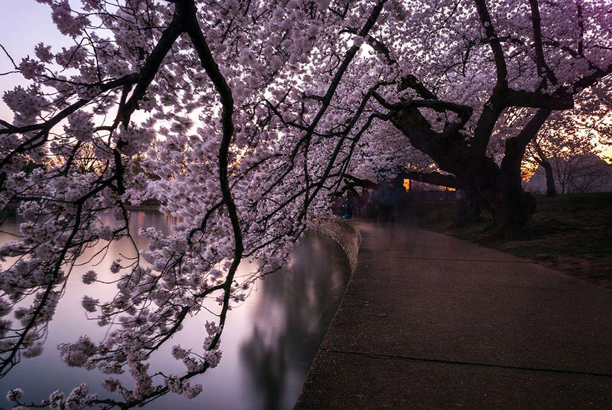 spring-japan-cherry-blossoms-national-geographics-210