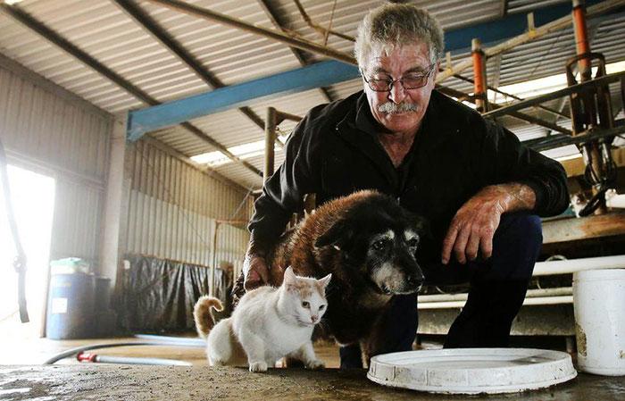 worlds-oldest-dog-dies-age-30-kelpie-maggie (6)