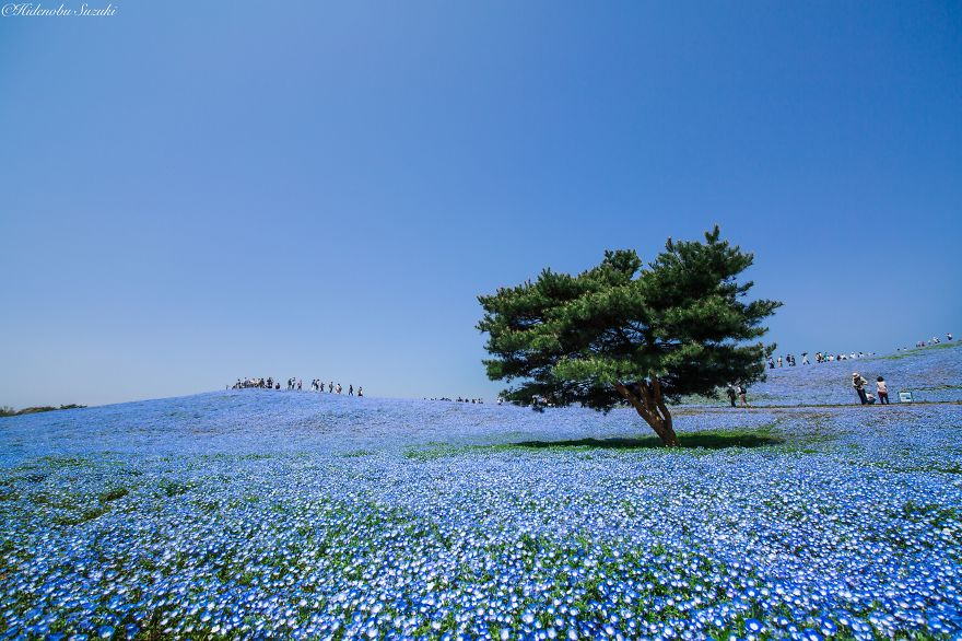 Japan-Hitachi-Seaside-Park