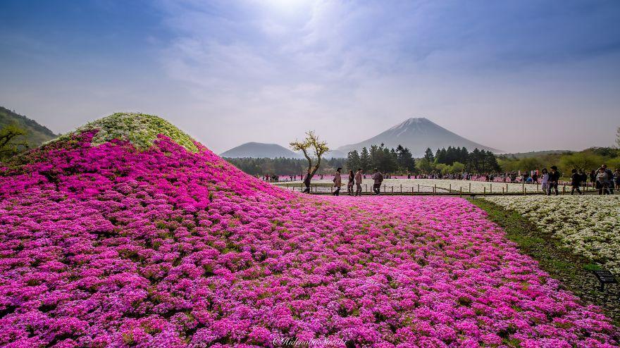 Japan-Hitachi-Seaside-Park (4)