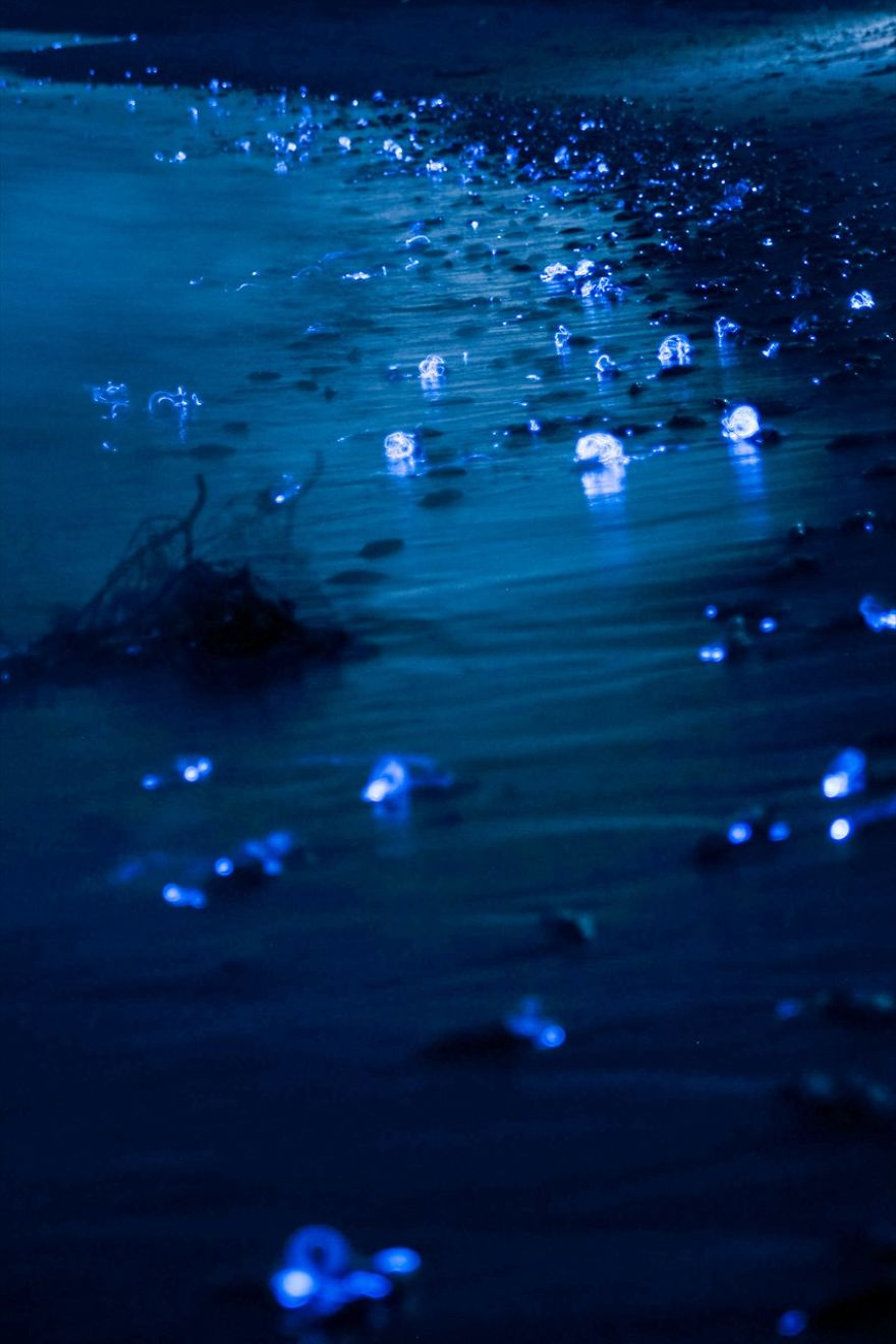 mysterious-glowing-sea-in-japan-1