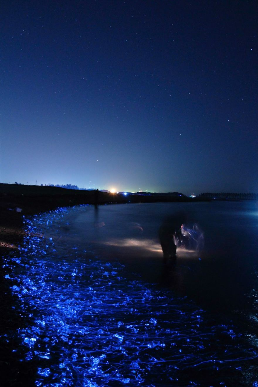 mysterious-glowing-sea-in-japan
