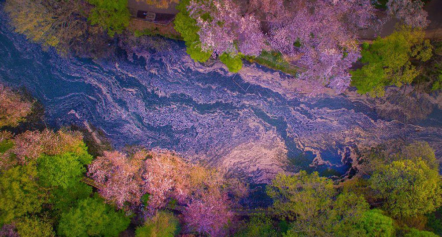 sakura-cherry-blossom-drone-photography-danilo-dungo-japan (3)