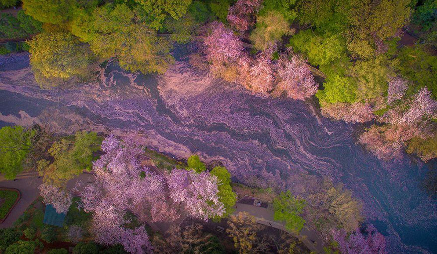 sakura-cherry-blossom-drone-photography-danilo-dungo-japan-6 (1)
